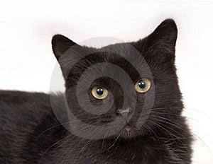 Fronte di un gatto nero Fotografie Stock