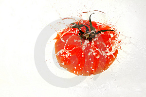 Tomate Que Espirra Na água Fotografia de Stock Royalty Free - Imagem: 1559087
