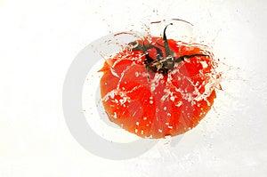Tomaten Som In Plaskar, Bevattnar Royaltyfri Fotografi - Bild: 1559087