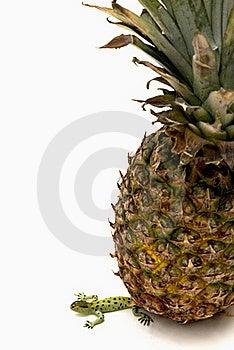 Fruit Crush Royalty Free Stock Images - Image: 15500489