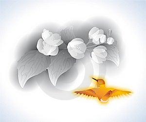 Jasmijn En Vogeltje Royalty-vrije Stock Foto's - Afbeelding: 15500838