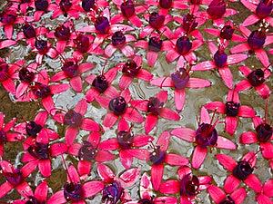 Flower Royalty Free Stock Photos - Image: 15509148
