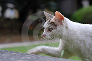 Cat Portrait Royalty Free Stock Images - Image: 15511969