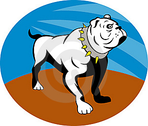 Proud English Bulldog Royalty Free Stock Photography - Image: 15513497