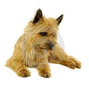 Resting Dog Stock Photography - Image: 15514842