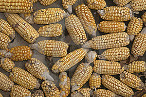 Corn Stock Photography - Image: 15517562