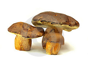 Ceps Royalty Free Stock Photos - Image: 15521068
