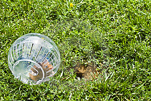 So Close But So Far Away, Hamster Ball Royalty Free Stock Photography - Image: 15521327