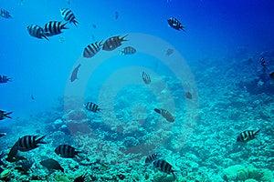 Astonishing Undersea World Of Red Sea. Stock Image - Image: 15525401