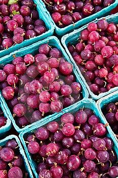 Gooseberries Stock Photos - Image: 15526133