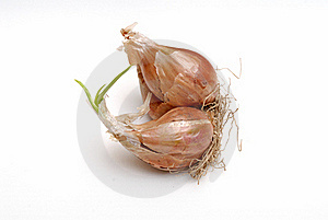 Bulb Onions Royalty Free Stock Photography - Image: 15527447