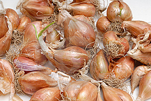 Pile Of Bulb Onions Stock Image - Image: 15527491