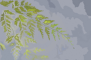 Hand Drawn Leaf Of A Fern Stock Image - Image: 15534821