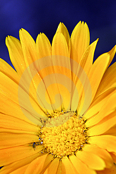 Close-up Of Yellow Flower Stock Image - Image: 15537201