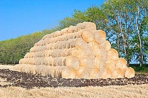 Harvest Of Rye Stock Photos - Image: 15538833