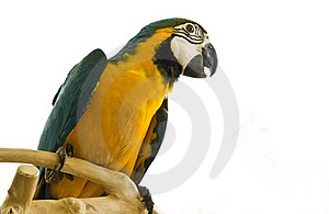 Parrot On A Stand Stock Photography - Image: 15539152
