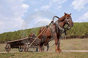 Horse Royalty Free Stock Image - Image: 15539186