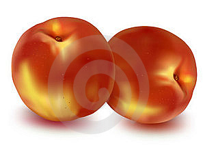 Two Ripe Peaches. Stock Image - Image: 15539661