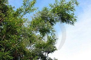 Grön Tree För Bambu Royaltyfri Foto - Bild: 15542455
