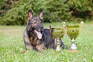 German Sheepdog Royalty Free Stock Image - Image: 15542476