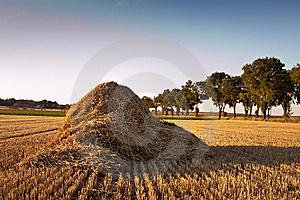 Field After Harvest Stock Photos - Image: 15550603