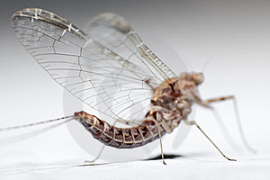 Fly From Rear Stock Image - Image: 15561891