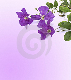 Violet Flowers Royalty Free Stock Photo - Image: 15565895