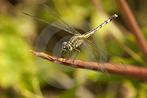 Dragonfly Stock Photos - Image: 15567353