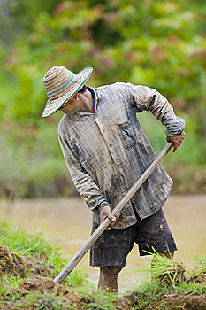 Asian Farmer Preparing The Ground Stock Images - Image: 15573464