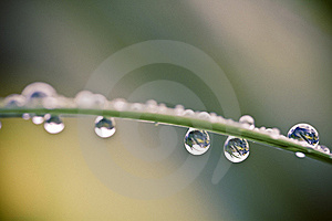Waterdrop On A Leaf Stock Photography - Image: 15598562