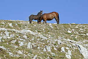 Horse With Colt Royalty Free Stock Image - Image: 15600146