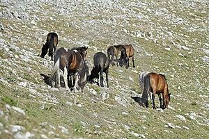 Wild Horses Stock Images - Image: 15600704