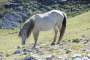 Wild Horse Stock Photography - Image: 15600722