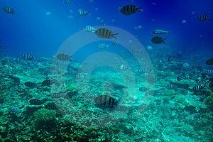 Astonishing Undersea World Of Red Sea. Stock Photo - Image: 15603850