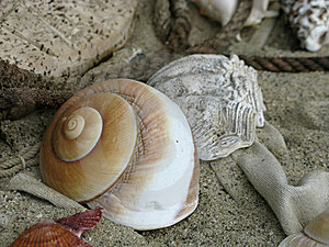 Shell On Beach Royalty Free Stock Images - Image: 15609009
