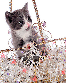 Prissy Kitty Royalty Free Stock Image - Image: 15612146
