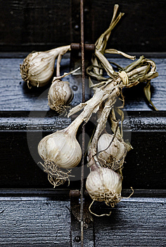 Garlic Stock Photo - Image: 15625620