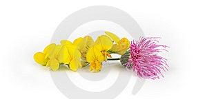 Flores Hermosas Brillantes Imagenes de archivo - Imagen: 15626284