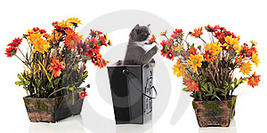 Sniffing Kitty Royalty Free Stock Images - Image: 15629309