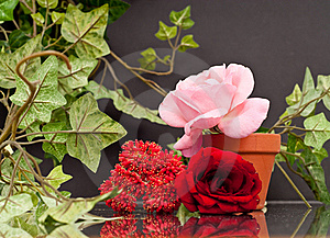 Love For Flowers Royalty Free Stock Photos - Image: 15639718