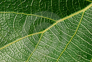 Leafage Royalty Free Stock Image - Image: 15644966