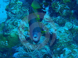 Spotted File Fish Stock Photo - Image: 15654920