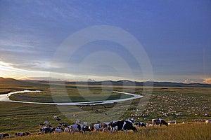 Herd In Prairies Sunset Glow Stock Image - Image: 15666261