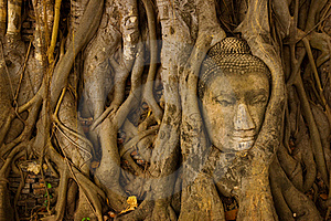Stone Buddha Head On The Tree Root Royalty Free Stock Photography - Image: 15666957