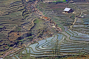 Rice Fields Sapa Vietnam Stock Photos - Image: 15667693