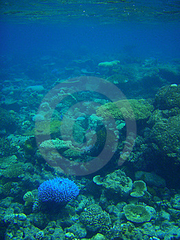 Coral Reef Royalty Free Stock Images - Image: 15673239