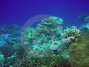Coral Reef Royalty Free Stock Photos - Image: 15673258