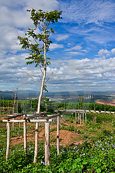 Tree Planting And Electric Plant Royalty Free Stock Photography - Image: 15677357