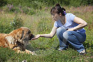 Lady Feeding Dog Royalty Free Stock Photo - Image: 15678705