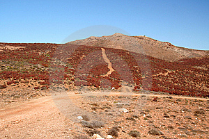 Richtersveld Red Aloes. Stock Images - Image: 15685644